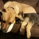 zuri  & puppy
