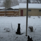 murray-in-the-snow-feb-2012-1024x768