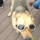 tess-doggles